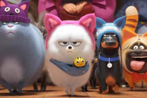 Мультфильм Тайная жизнь домашних животных 3 о дате его выхода